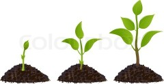 green-young-plant-life-process-isolated-on-white