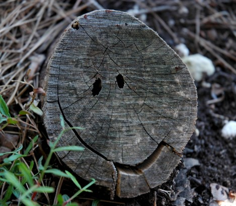 stump smiley face