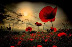 remembering-heroes-Big-Lunch-Poppy-image
