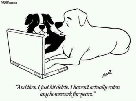 dogs-and-homework-now