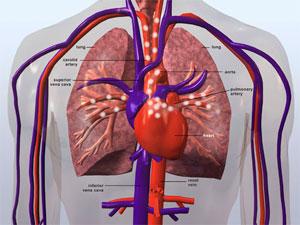 circulatory-systemREV2